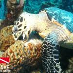 Tortuga Dive Center